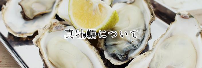 真牡蠣について