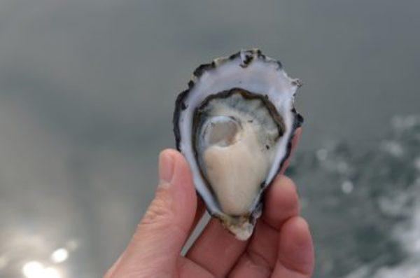 保護中: 大好きな大入島で死ぬまで漁師を続けたい。