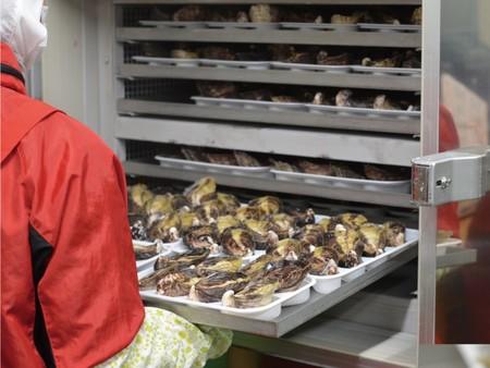生でツルっと! プロトン凍結 大入島オイスター 生食用冷凍真牡蠣 (20個入×1パック)