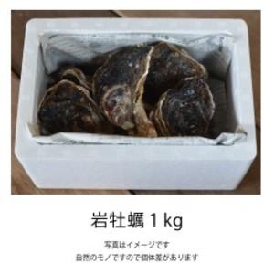 岩牡蠣 (佐伯産)1kg