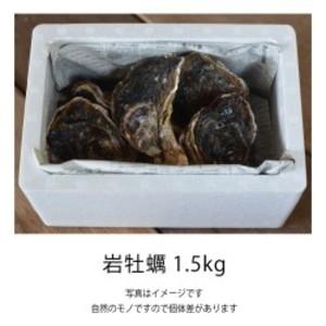 岩牡蠣 1.5kg