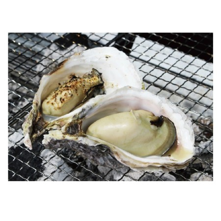 岩牡蠣 (佐伯産) 5kg